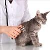 Ветеринарные клиники в Вязниках